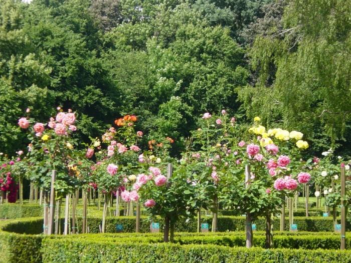 Сады Маунт Стюарт