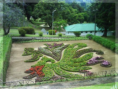 Полезные дикорастущие растения:цикорий, борщевик, репейник, одуванчик