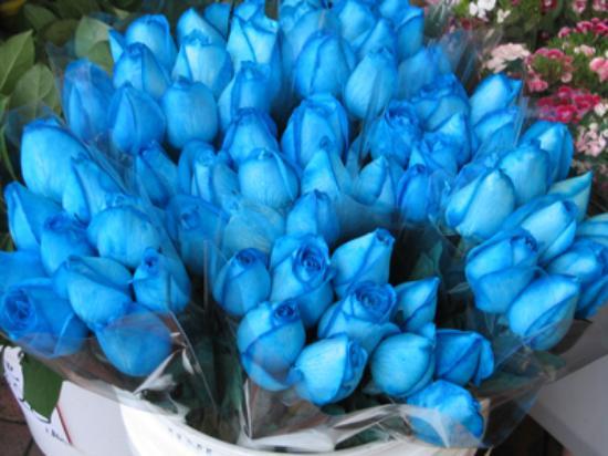семена комнатных цветов почтой с бесплатной доставкой по россии