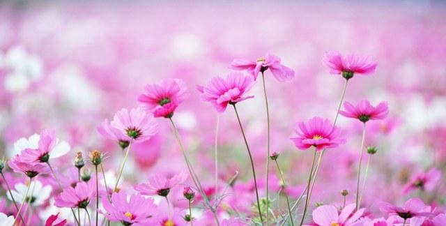 Декоративный венок из живых цветов
